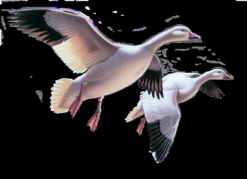 Ptice..... 0_7809d_5d05fb99_L