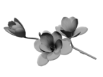 SD NP FLOWERS 2.png