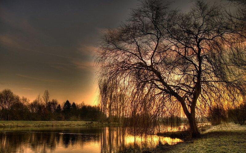 """Дерево у воды, деревья, вода, природа.  Оригинал схемы вышивки  """"Дерево у воды """" ."""