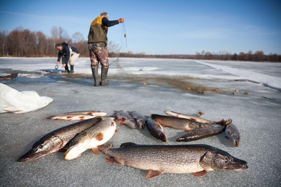 как ловят рыбу в петрозаводске
