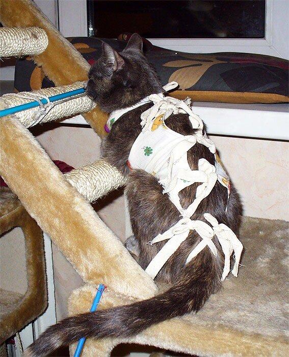 Тинки после операции, 7 сентября