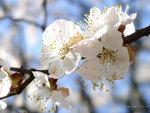 spring_0012