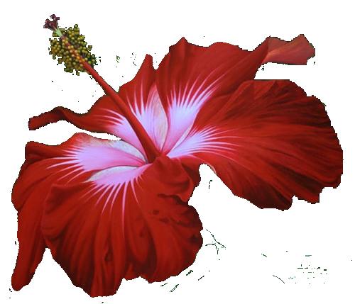 Пнг красный цветок