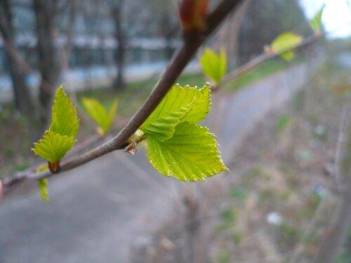 Кусочек Питерской весны