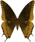RR_Butterfly1.png