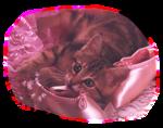 Кошки 5 0_50a05_e7236355_S