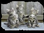 Кошки 5 0_50a15_d3881c36_S