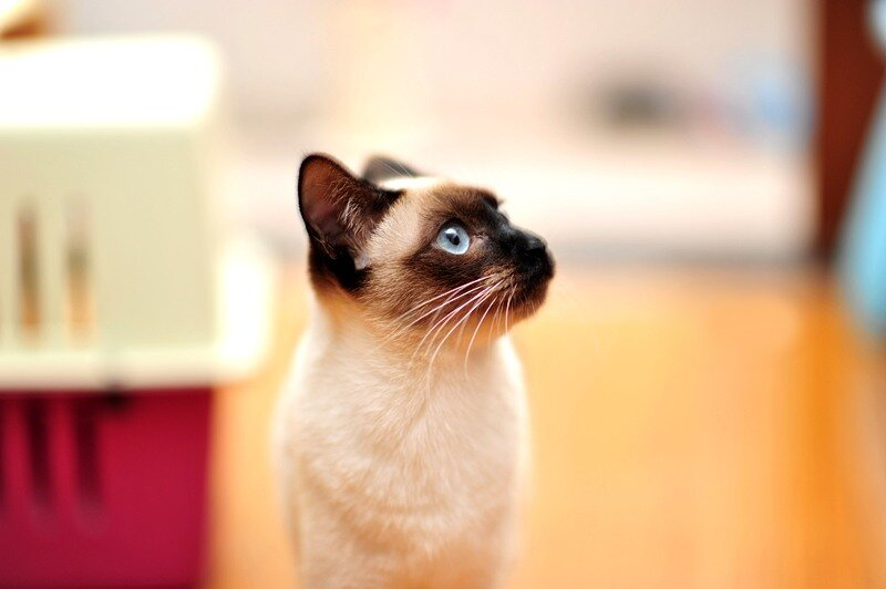 Кошки  0_52910_b9f53e36_XL