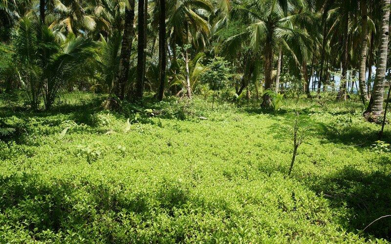 зеленой природы