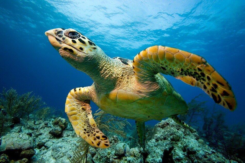 Морская черепаха бисса нью провиденс