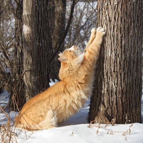 Тигрица с тигренком фото 5