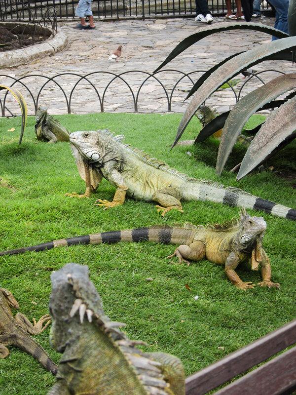 Парк игуан