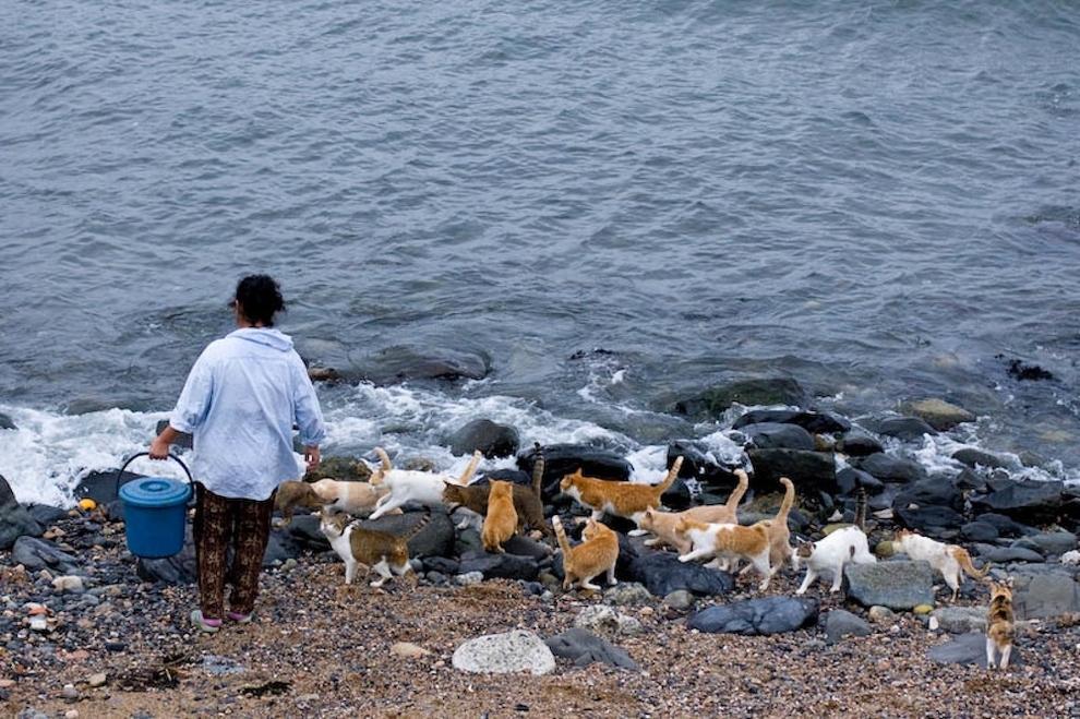 Фото 2 - Кошачий рай в Японии