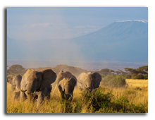 Кения. Elephant family walking in the Amboseli National Park in Kenya, with the Kilimanjaro. Francois_Gagnon - Depositphotos