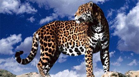 Пятнадцать жертв от леопарда-людоеда