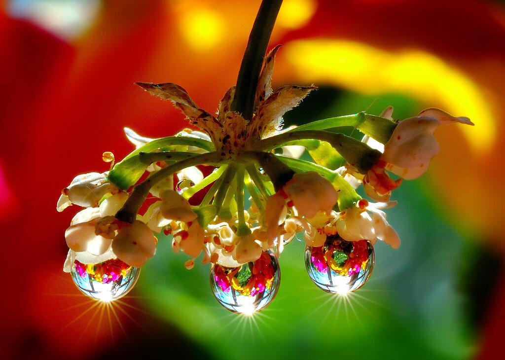 Солнце утро цветы