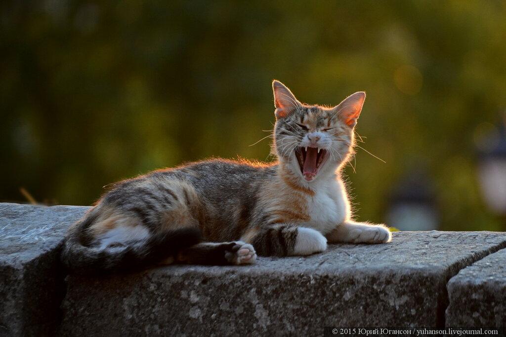 Их всемирный день! World Cat Day