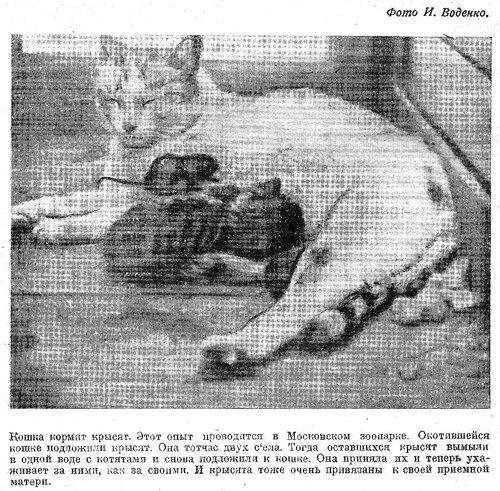 1935, 07. Ю.Н. 3.jpg