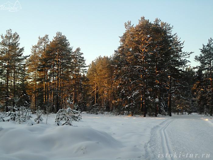 зимний_лес_zimniy_les