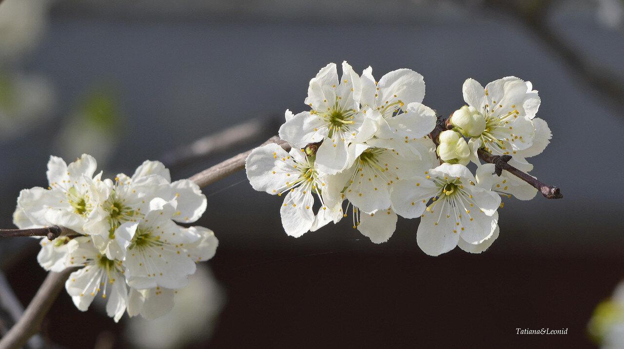 Весна цветочная