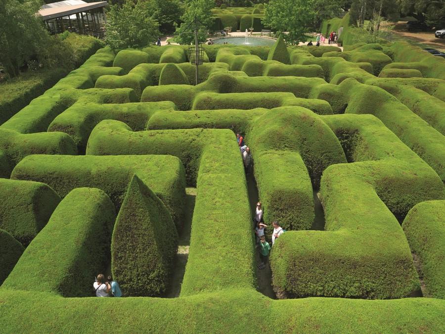 8. Эшкомб Мейз (Виктория, Австралия) Для строительства одного из самых старых растительных лабиринто