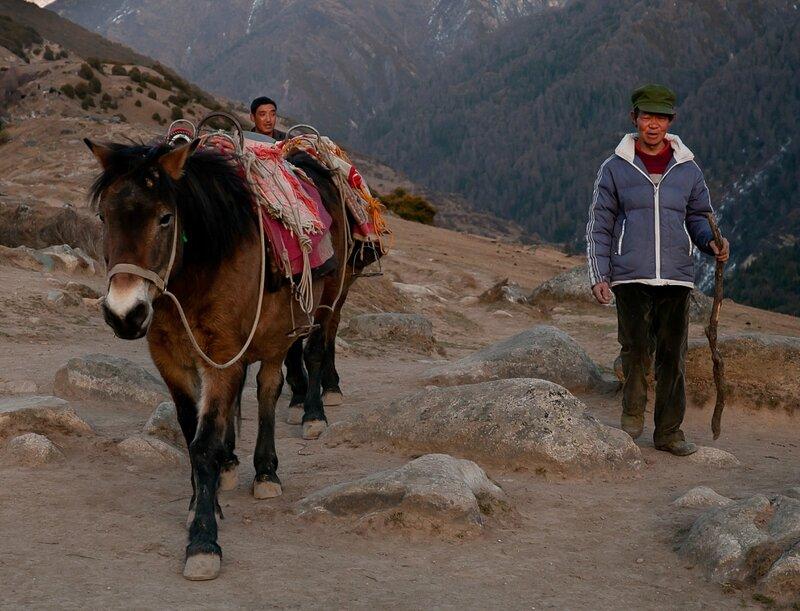 Усталые лошадки