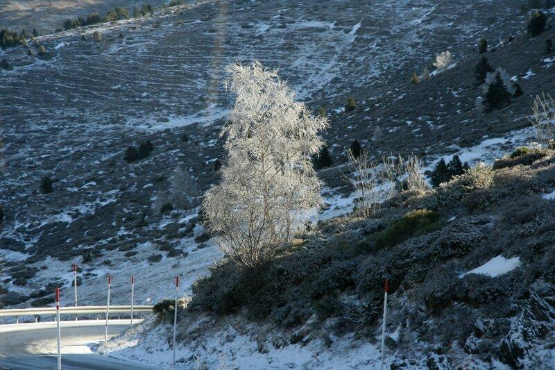 Береза в инее, северные Пиренеи