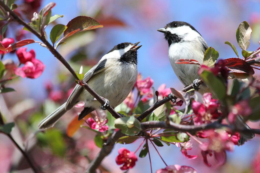 Поют весну!