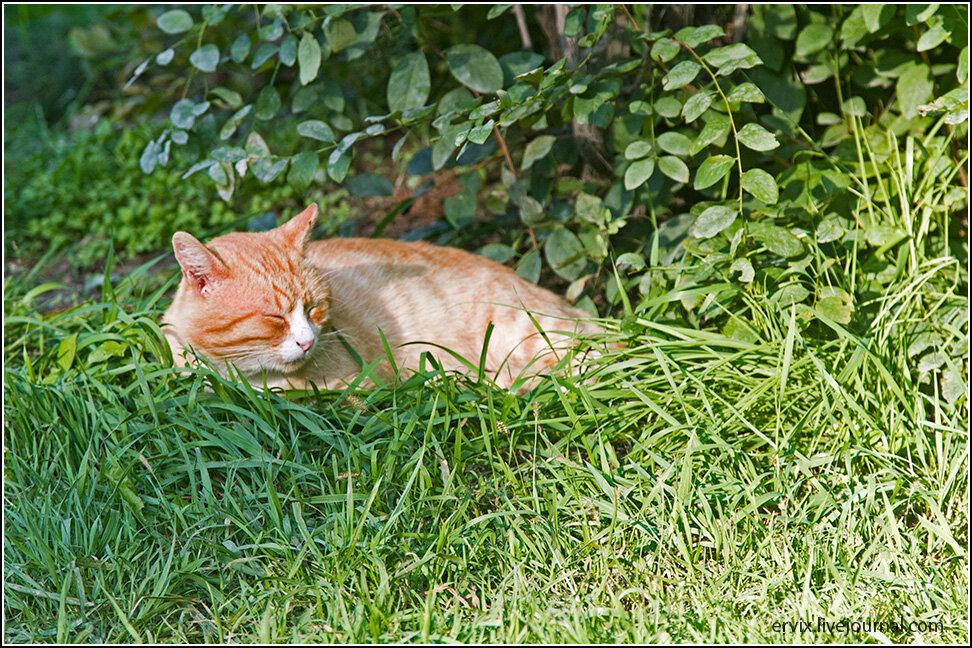 Котик на отдыхе