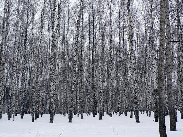 зимняя роща