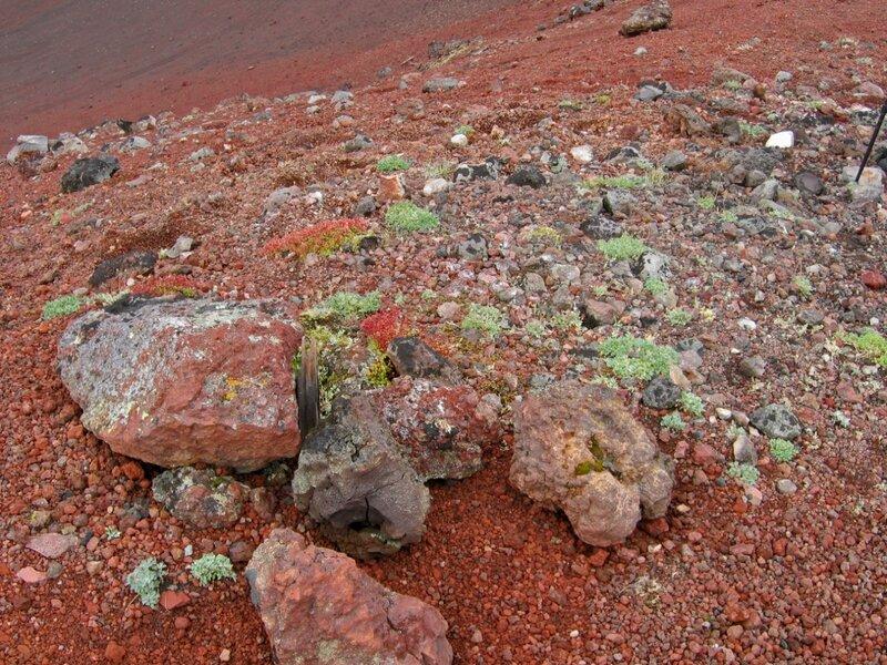 Камчатка, Толбачик, вулканические шлаки, молодая растительность