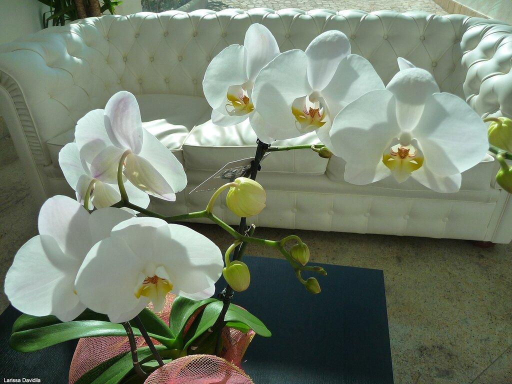 Нежные орхидеи элегантно смотрелись в