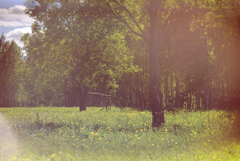 летняя поляна