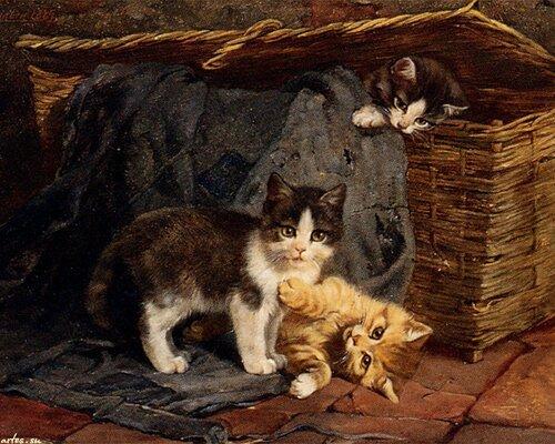 кошки,коты,котята