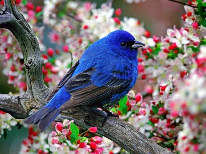 Предлагаем вашему вниманию красивую подборку фотографий разных птиц.