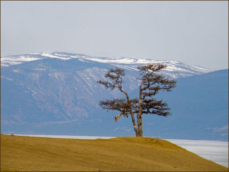 Ольхон. Священное дерево желаний