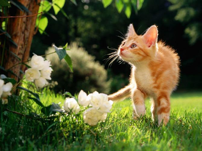 кошки - исследует мир вокруг