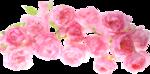 «романтический сад» 0_64901_a255d573_S