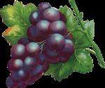 Виноград  0_6633b_a703a7d5_S