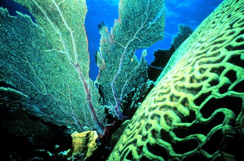 Подводный мир-Kораллы 74554