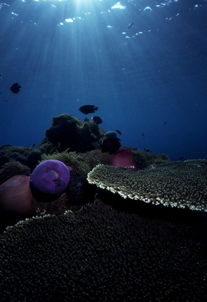 Подводный мир-Kораллы 91651