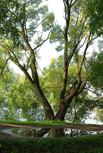 Гроза на Елагином острове - парк и облака