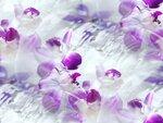 blooms7_1 (7).jpg