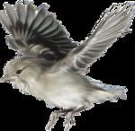 Птички с радикала.