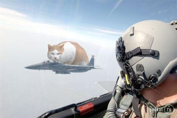 кот в  космосе