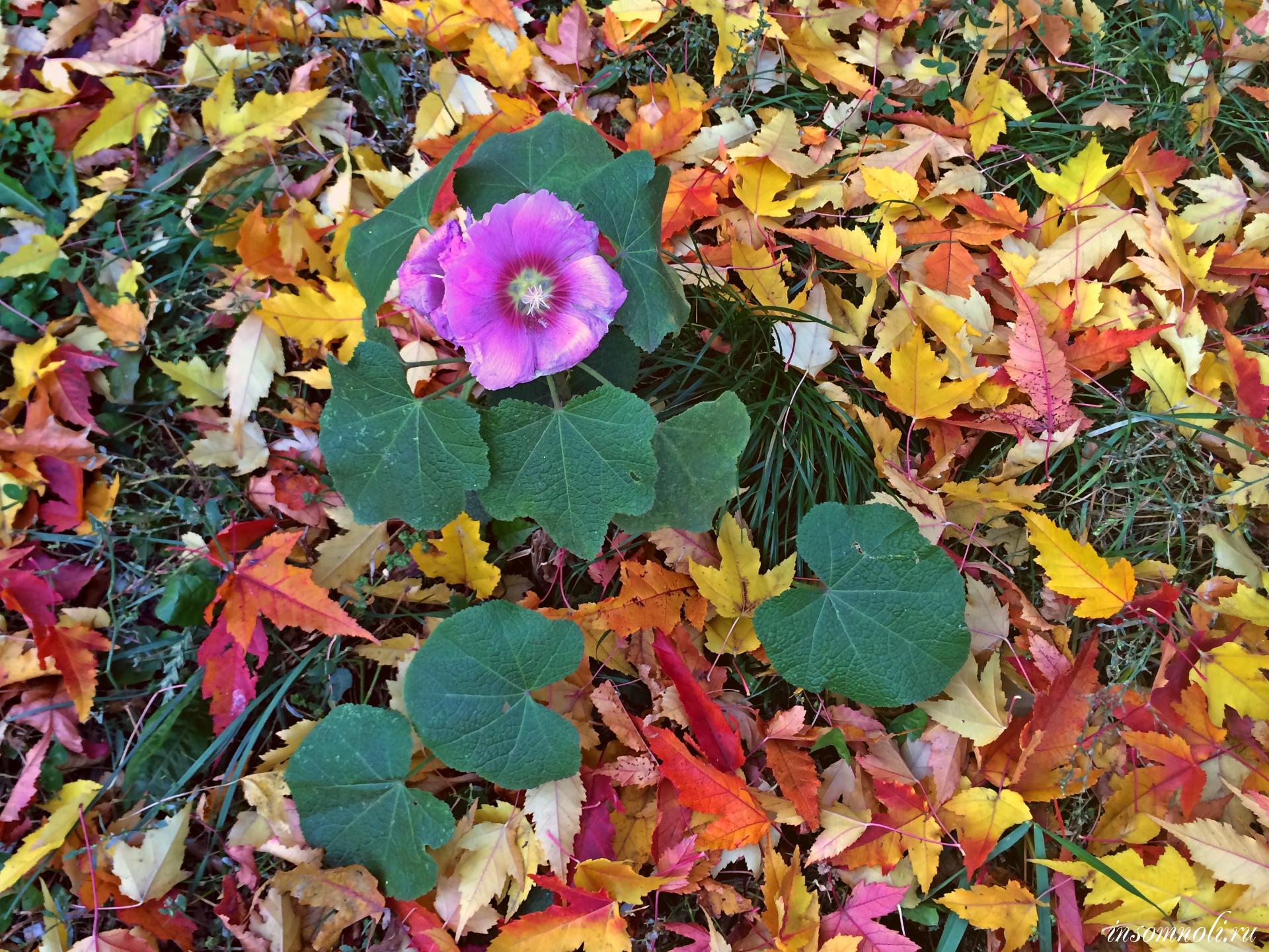 Цветной октябрь