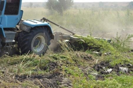 ВКрыму наркополицейские уничтожили поле с 2-мя тоннами конопли