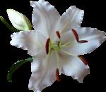 2593flower43-AlejandraRosales-110707.png