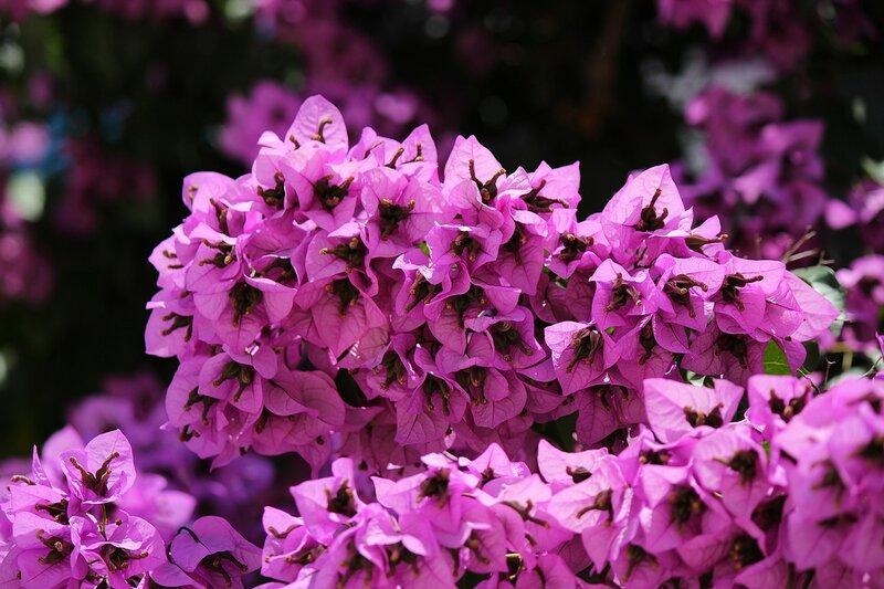 Цветы Черногории