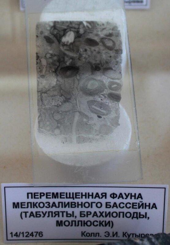 Перемещённая фауна мелкозаливного бассейна (табуляты, брахиоподы, моллюски)